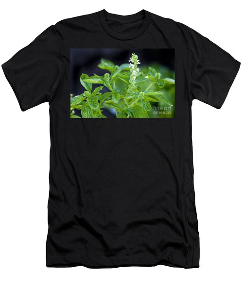 Men's T-Shirt (Slim Fit) featuring the photograph Basil With White Flowers Ready For Culinary Use by David Millenheft