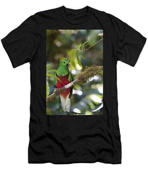 Beautiful Quetzal 1 Men's T-Shirt (Athletic Fit)