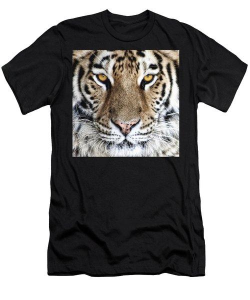 Bengal Tiger Eyes Men's T-Shirt (Athletic Fit)