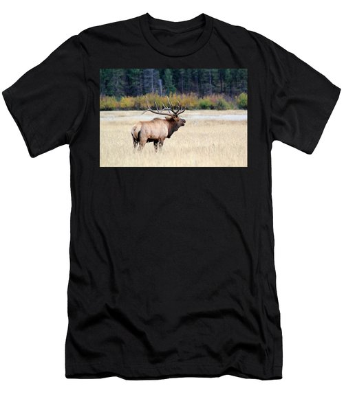 Big Colorado Bull Men's T-Shirt (Athletic Fit)