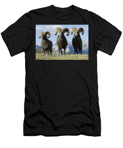 Big Horn Sheep Men's T-Shirt (Athletic Fit)