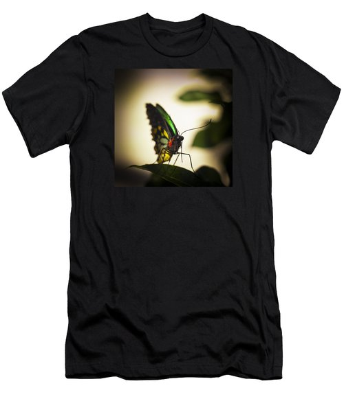Birdwing Butterfly Men's T-Shirt (Athletic Fit)