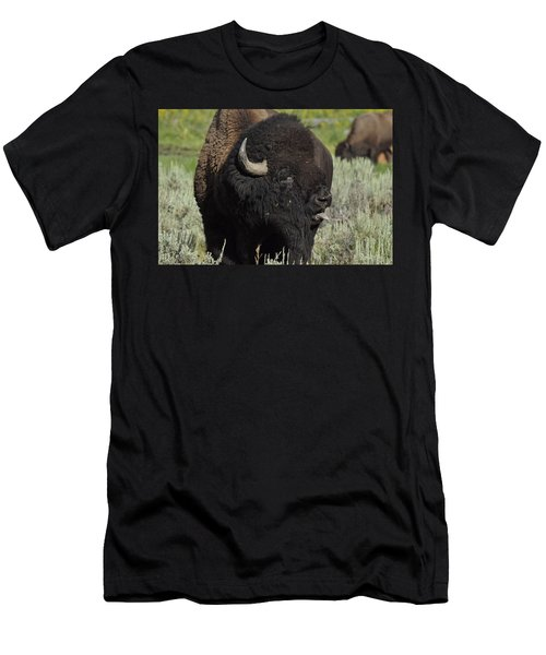 Bison Men's T-Shirt (Athletic Fit)