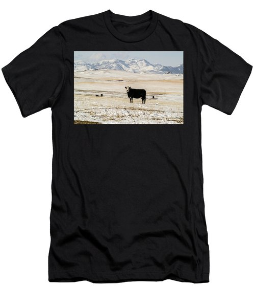 Black Baldy Cows Men's T-Shirt (Athletic Fit)