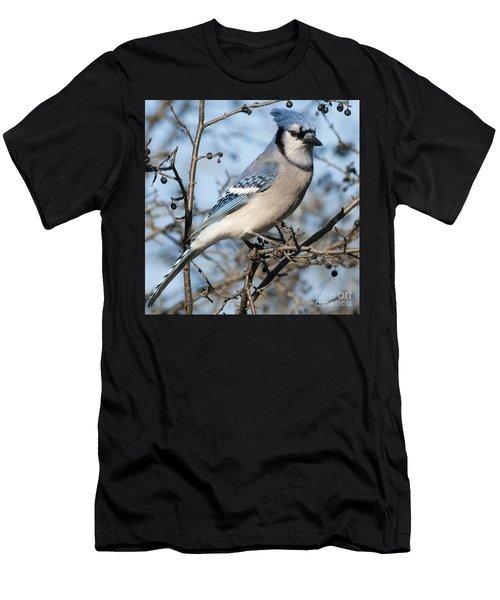 Blue Jay.. Men's T-Shirt (Athletic Fit)