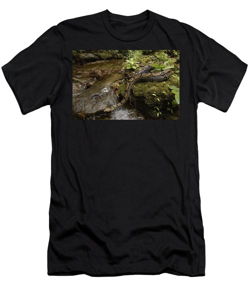 Boa Constrictor Crossing Stream Men's T-Shirt (Slim Fit) by Pete Oxford