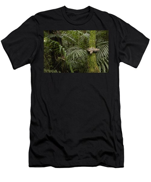 Boa Constrictor In The Rainforest Men's T-Shirt (Slim Fit) by Pete Oxford