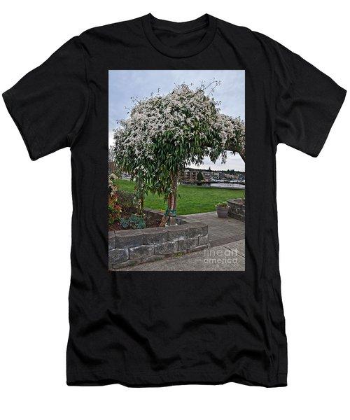 Bridal Veil Vine Stephanotis Growing On A Trellis Men's T-Shirt (Athletic Fit)