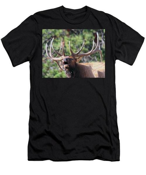 Bugling Bull Men's T-Shirt (Athletic Fit)