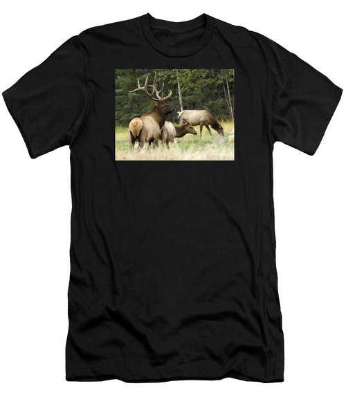 Bull Elk With His Harem Men's T-Shirt (Athletic Fit)