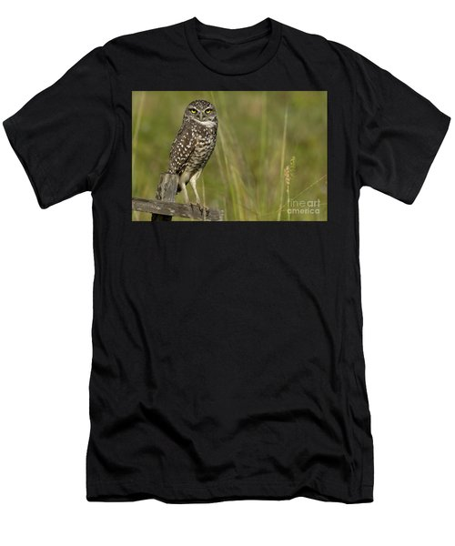 Burrowing Owl Stare Men's T-Shirt (Athletic Fit)