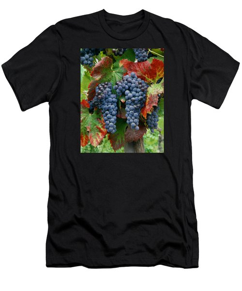 5b6374-cabernet Sauvignon Grapes At Harvest Men's T-Shirt (Athletic Fit)