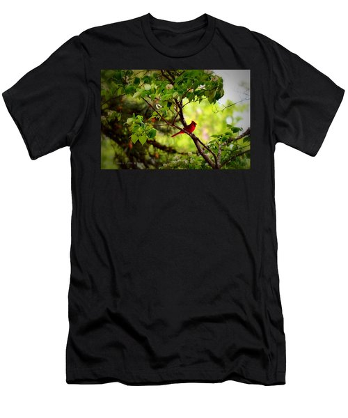 Cardinal In Dogwood Men's T-Shirt (Athletic Fit)