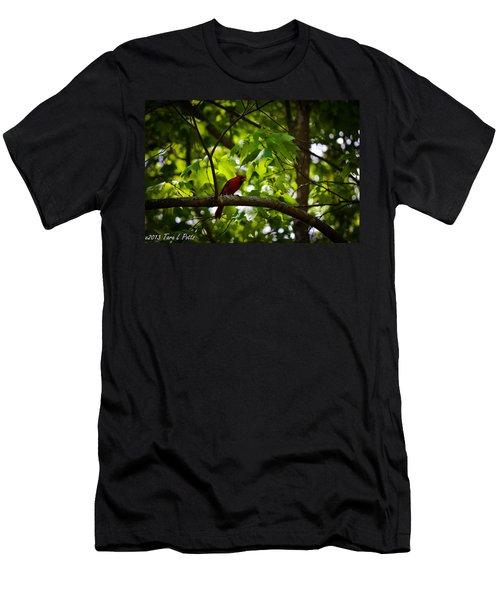 Cardinal In The Trees Men's T-Shirt (Slim Fit) by Tara Potts