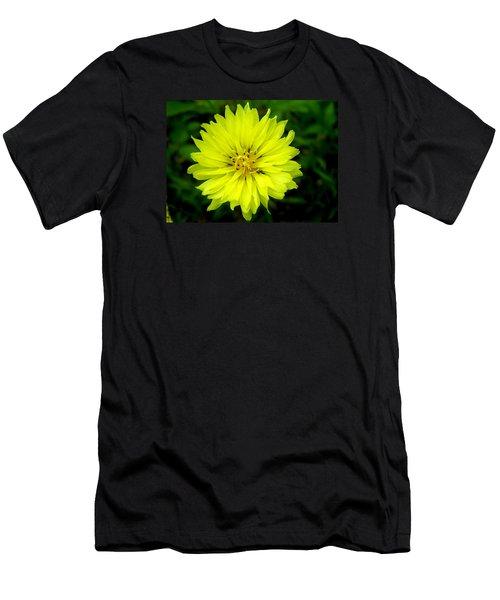 Wild Carolina Desert Chicory Men's T-Shirt (Slim Fit)