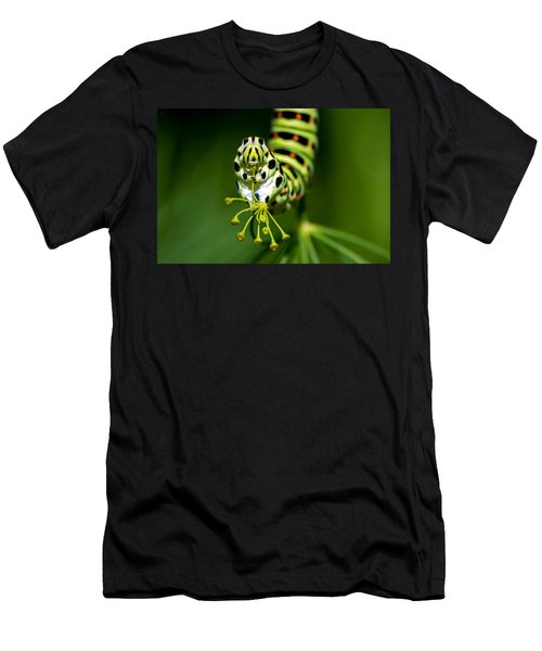 Caterpillar Of The Old World Swallowtail Men's T-Shirt (Athletic Fit)