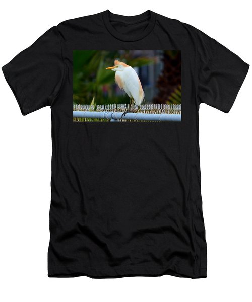 Cattle Egret Breeding Plumage Men's T-Shirt (Slim Fit) by Debra Martz