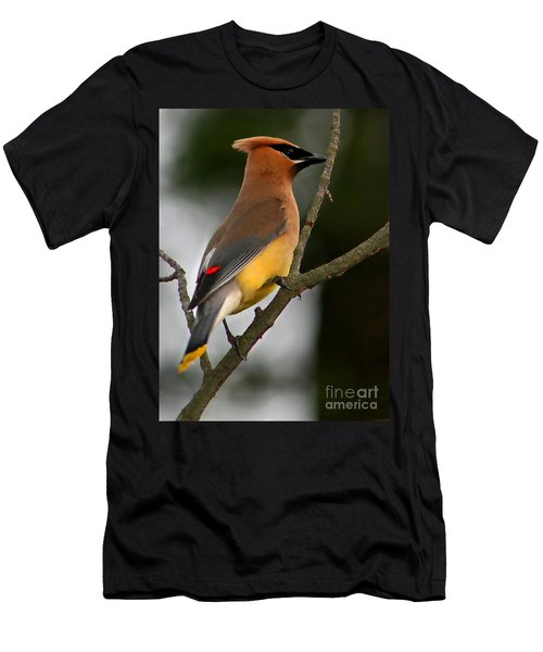 Cedar Wax Wing II Men's T-Shirt (Slim Fit) by Roger Becker