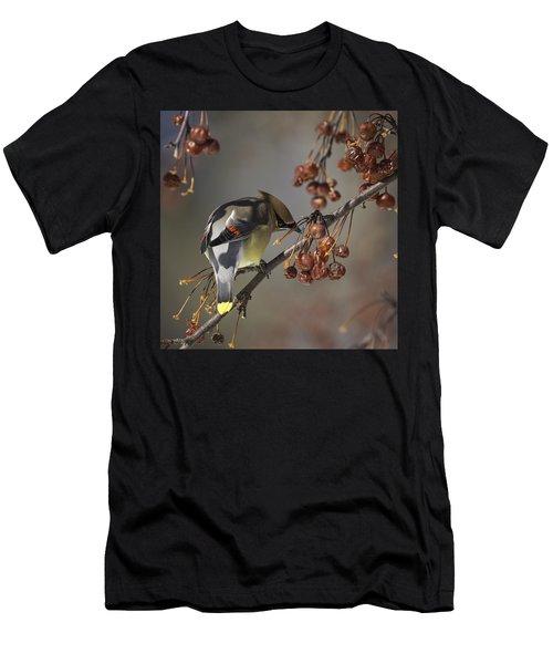 Cedar Waxwing Eating Berries 7 Men's T-Shirt (Athletic Fit)