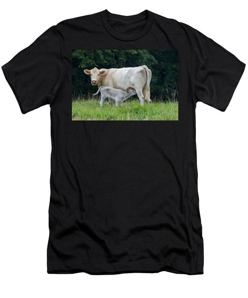 Charolais Cattle Nursing Young Men's T-Shirt (Slim Fit) by Chris Flees