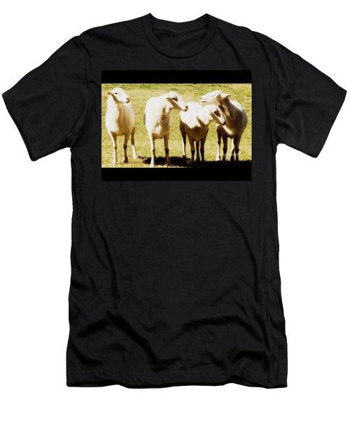 Cheviot Sheep Men's T-Shirt (Slim Fit) by Kathy Barney