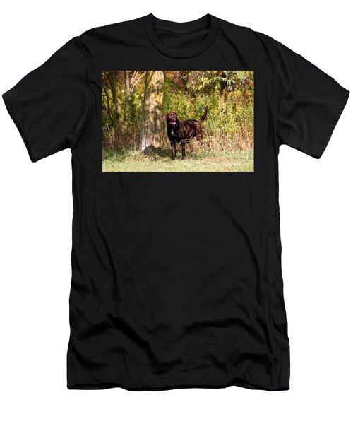 Chocolate Lab Cuteness Men's T-Shirt (Athletic Fit)