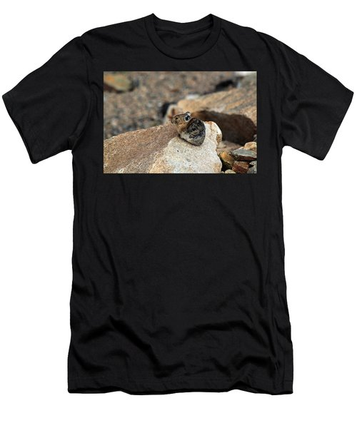 Colorado Pika Men's T-Shirt (Athletic Fit)