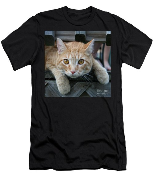 Cool Cat Named Calvin Men's T-Shirt (Athletic Fit)