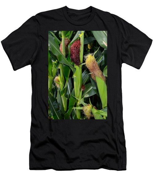 Corn Growing Men's T-Shirt (Athletic Fit)