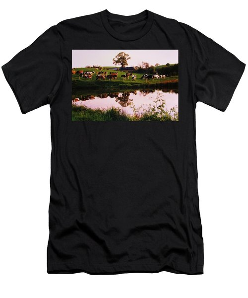Cows In The Canal Men's T-Shirt (Athletic Fit)