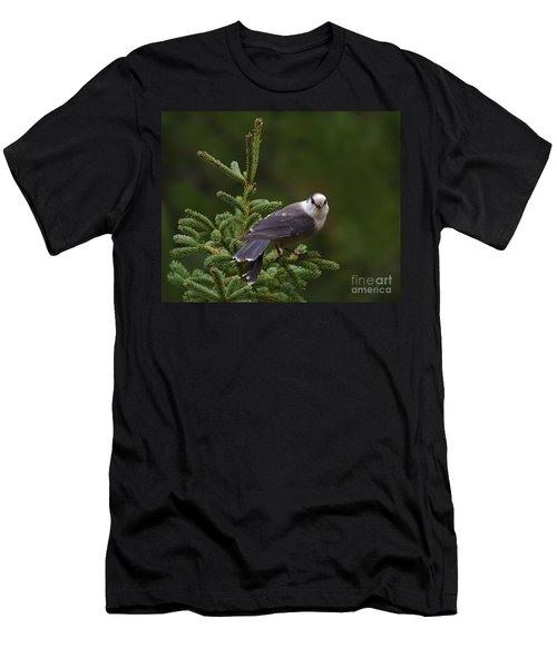 Cranberry Lover.. Men's T-Shirt (Athletic Fit)