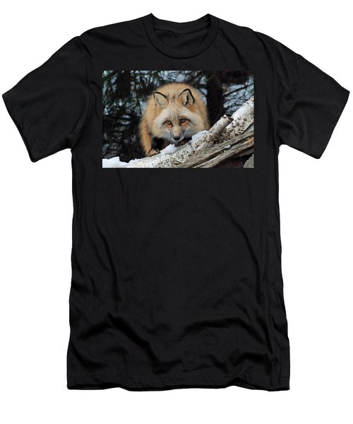 Curious Fox Men's T-Shirt (Slim Fit) by Richard Bryce and Family