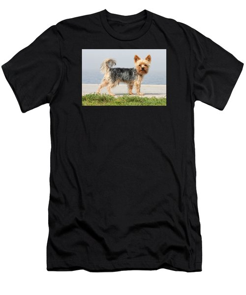 Cut Little Dog In The Sun Men's T-Shirt (Athletic Fit)