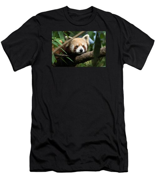 Cute Panda Men's T-Shirt (Slim Fit) by Fotosas Photography
