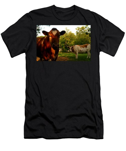 Dads Cows Men's T-Shirt (Athletic Fit)
