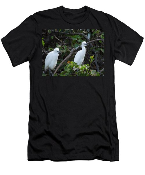 Egret Chicks Waiting To Be Fed Men's T-Shirt (Athletic Fit)