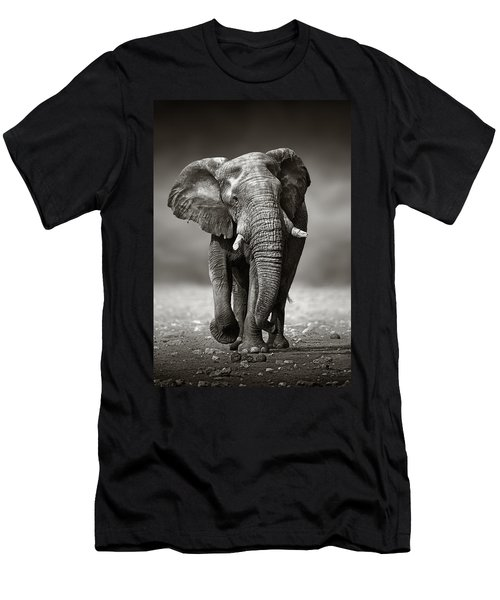 Elephant Approach From The Front Men's T-Shirt (Slim Fit) by Johan Swanepoel