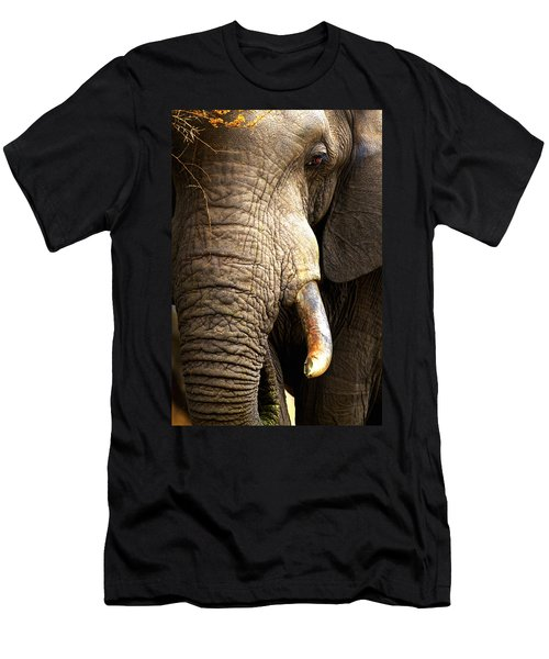Elephant Close-up Portrait Men's T-Shirt (Athletic Fit)