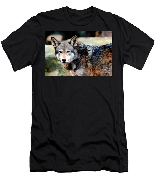 Endangered Red Wolf Men's T-Shirt (Slim Fit)