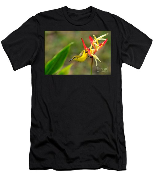 Female Olive Backed Sunbird Clings To Heliconia Plant Flower Singapore Men's T-Shirt (Athletic Fit)