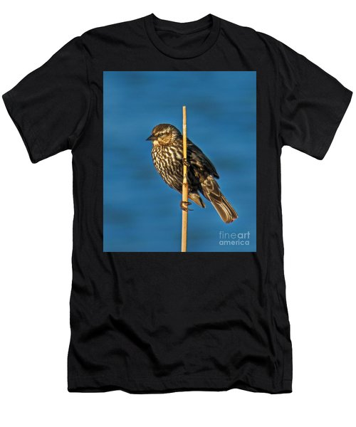 Female Red-winged Blackbird Men's T-Shirt (Athletic Fit)