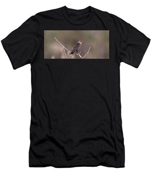 Female Red Winged Blackbird Singing Men's T-Shirt (Athletic Fit)