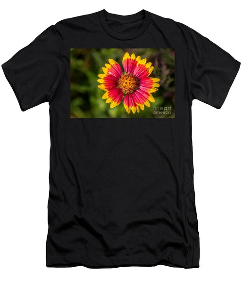 Gaillardia Shows Off Men's T-Shirt (Athletic Fit)