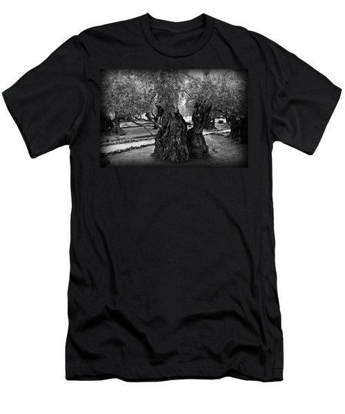 Garden Of Gethsemane Olive Tree Men's T-Shirt (Athletic Fit)