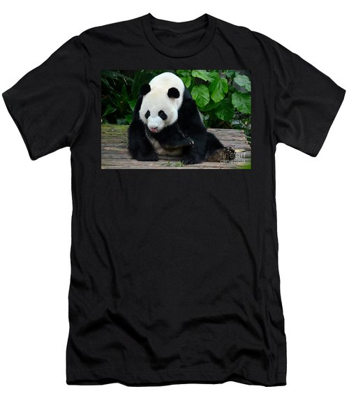Giant Panda With Tongue Touching Nose At River Safari Zoo Singapore Men's T-Shirt (Athletic Fit)