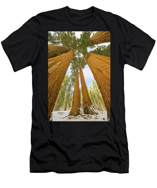 Giant Sequoias And First Snow Men's T-Shirt (Athletic Fit)