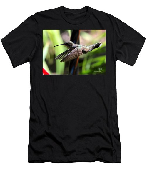 Gliding Hummingbird Men's T-Shirt (Athletic Fit)