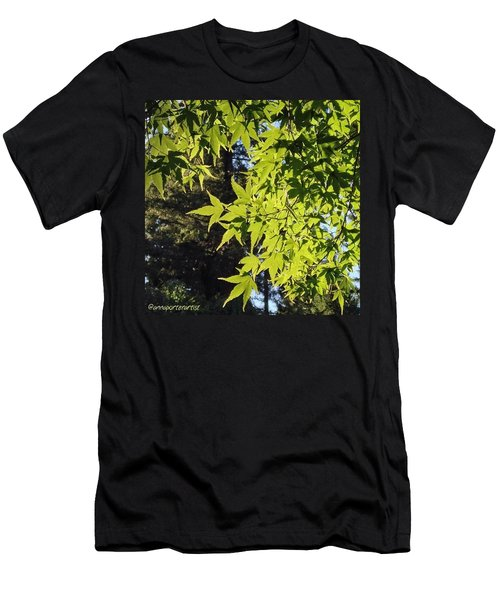 Glowing Greens My Favorite Maple Tree Men's T-Shirt (Athletic Fit)