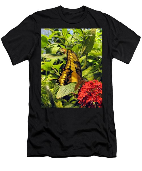Gold Giant Swallowtail Men's T-Shirt (Athletic Fit)