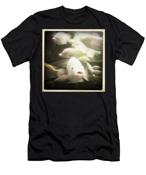 Gouramis Men's T-Shirt (Slim Fit) by Bradley R Youngberg